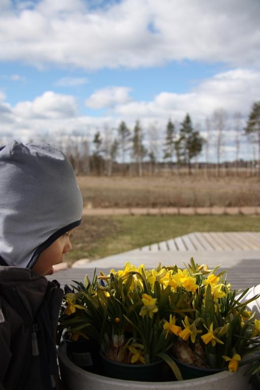 kevät kukkia ja pieni tutkia