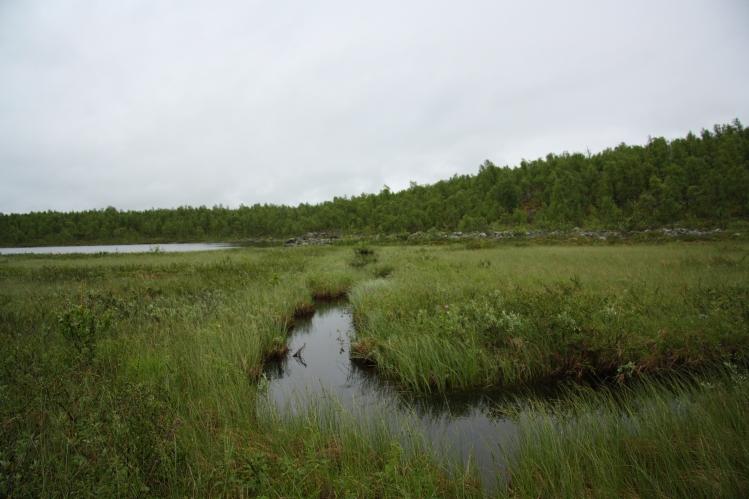 tunturipuri marsh creek