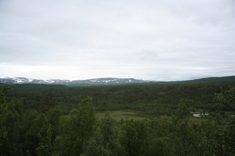 wetlands and rivers swedish lapland