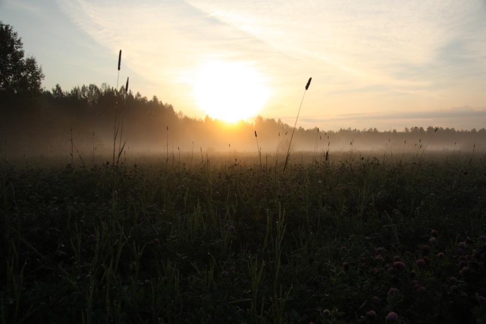 aamu usva ja apilapelto