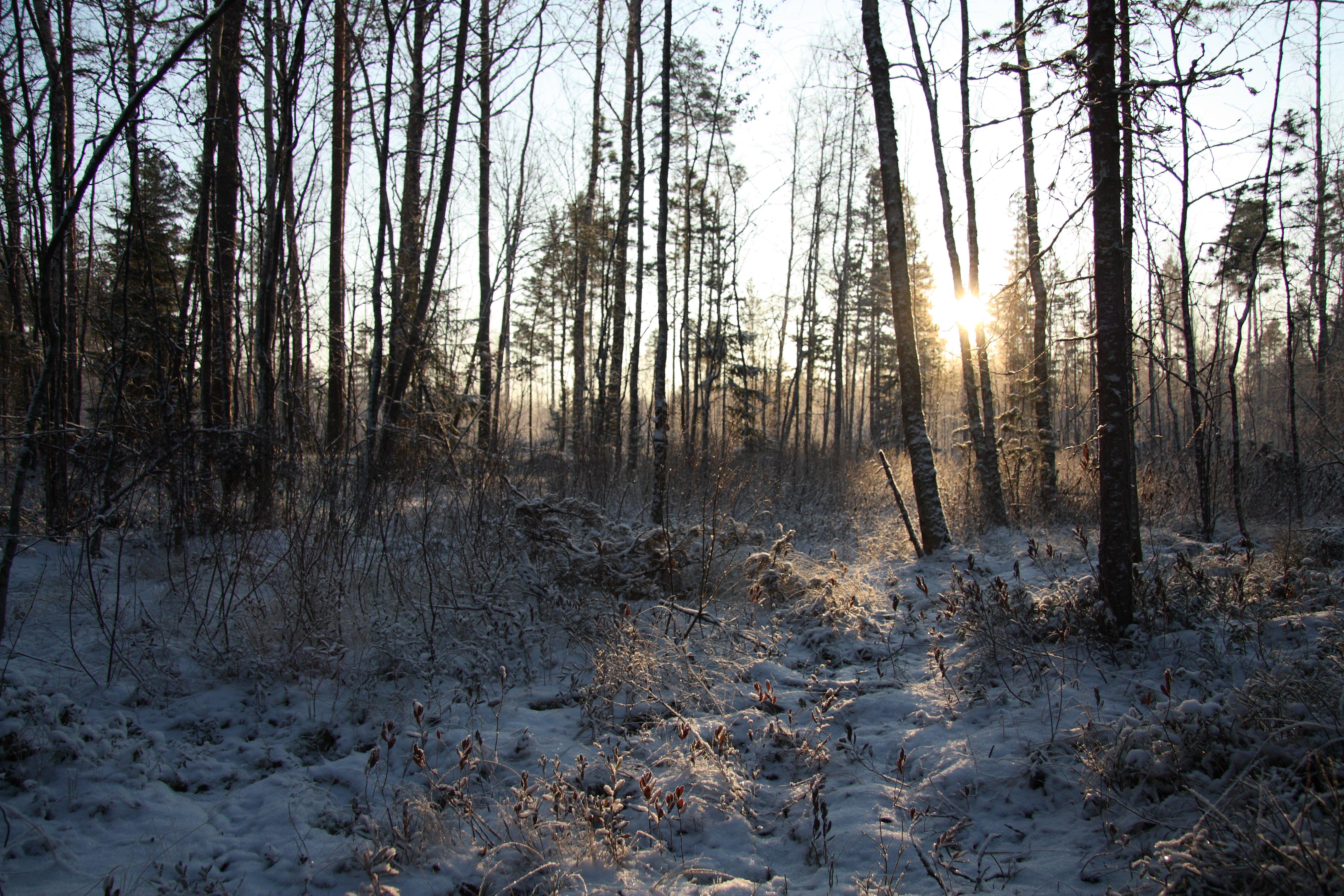 Talven taika