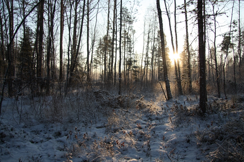 valokeidas metsässä