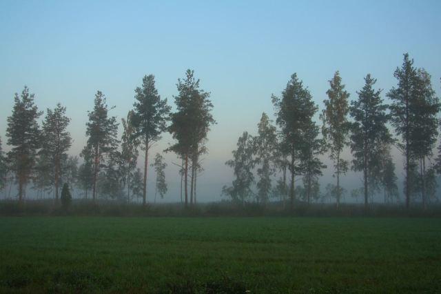 Nordic morning